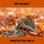 Animal Birthday Cards